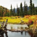 """Denali,Alaska"" by Leksele"