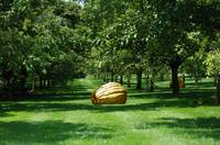 Man-made pumpkins in the middle of apple-trees.