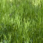 """Grass"" by RobertKovacs"