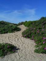 Hammonasset Dune Path