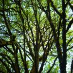 """Trees At Watershed Park"" by christophergombosky"