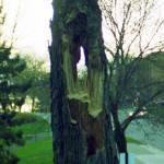 """hole tree"" by Angel_May"