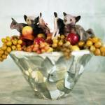 """""""fruit_bats"""" by Angel_May"""