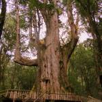 """Taiwan_ForestsSmangusJenshibao_JAN2008_368"" by TreeOctopus"