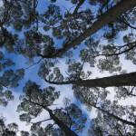 """TasmanNatParkCapeRaoul_7AUG04_0096"" by TreeOctopus"