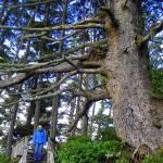 """""""Victoria_VancouverIsleBC_Canada_DEC06_143"""" by TreeOctopus"""