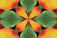 Orange and green flower pattern