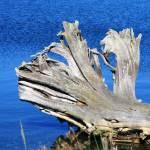 """""""Driftwood"""" by rhallam"""