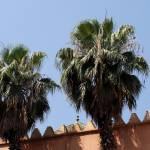 """Moroccan Palms 2"" by rhallam"