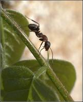 My first ant macro