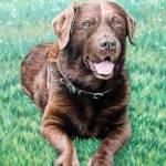"""""""Schoko Labrador"""" by ArtsandDogs"""