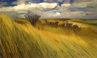 Iowa Prairie Grasses