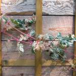 """Sunny Pink Vine"" by woodlarkny"
