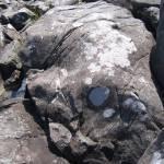 """""Rhino"" Rock at McClellan Park, downeast Maine"" by woodlarkny"