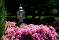 Eco-Friendly Street Light in Rose Bush