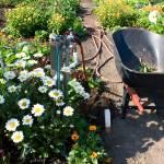 """Garden Still Life"" by staceylynnpayne"