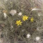 """yellow flower 2_1"" by Tritch-Pix"