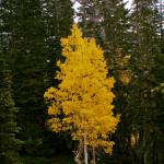 """yellow tree"" by Tritch-Pix"