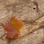 """""""leaf wood"""" by Tritch-Pix"""