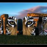 """Tiger Henge"" by RaysImages"