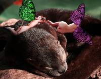 Otter nap-two-fay---