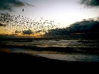 Wave of Birds