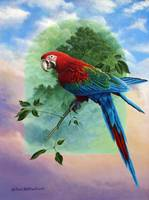 One Earth Two Worlds - Macaw