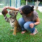 """Fetch, Tiger, Fetch Chiang Mai, Thailand"" by SabinaBhasin"