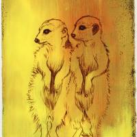 Meerkats Art Prints & Posters by Stephanie Han