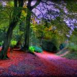 """""""Wendover Woods"""" by johnedwardmichael1"""
