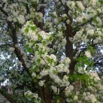 """""""Spring in Bloom"""" by Kennie"""