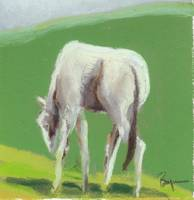 White Horse Grazing