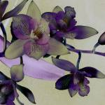 """The Essence of Orchids: Surreality"" by Mylene"