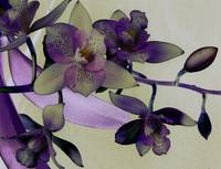 The Essence of Orchids: Surreality
