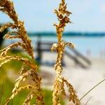 """Sea Oats"" by TybeeLife"