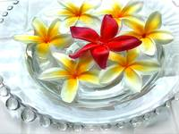 Glass Bowl of Plumeria