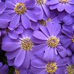 """Purple Flowers"" by thegardenpathphotography"