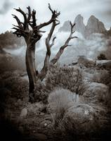 Organ mountains in fog, southern New Mexico.
