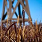 """Fountain Grass and Windmill Pylon Award Winner"" by johncorney"