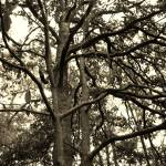 """""""Scrawny Trees"""" by Kejsmith"""