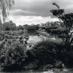 """Tree Landscape"" by alexiscampos"