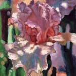 """Pink Iris"" by chloehedden"