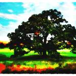 """Majestic Oak"" by WardArt"