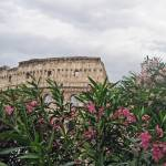 """Coliseum Floral View"" by mariavalentino"