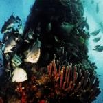 """""""Atlantic Spadefish"""" by Lorraine_Sommer"""