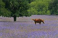 Horse in a Field of Wildflowers
