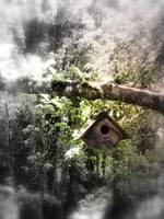 bird house in the apple tree