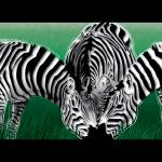 """Green Meadow Zebras"" by Art_By_Design_Studio"
