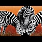 """Sunset Field Zebras"" by Art_By_Design_Studio"