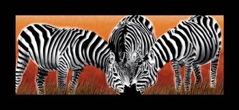 Sunset Field Zebras